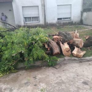 Despeje de troncos y ramas luego del temporal