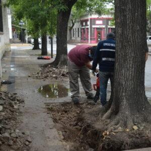 Tras los días de tormenta las cuadrillas municipales continúan profundizando la limpieza en la ciudad