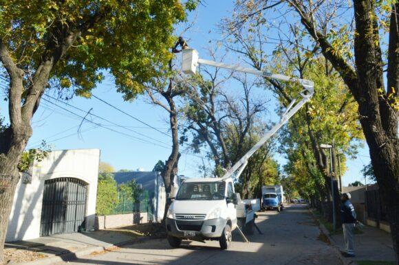 Una ciudad más limpia: el Municipio sigue interviniendo los espacios públicos con desmalezado y poda