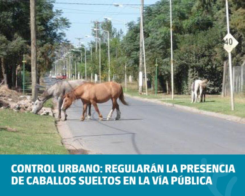 Control Urbano: Regularán la presencia de caballos sueltos en la vía pública