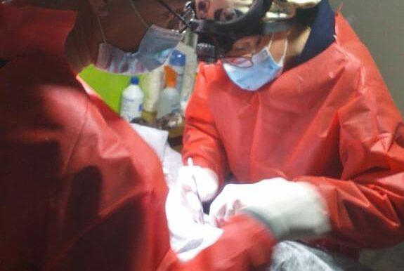 """En barrio Gutiérrez el programa """"Orejas Verdes"""" realizó 79 cirugías y vacunó a 250 animales"""