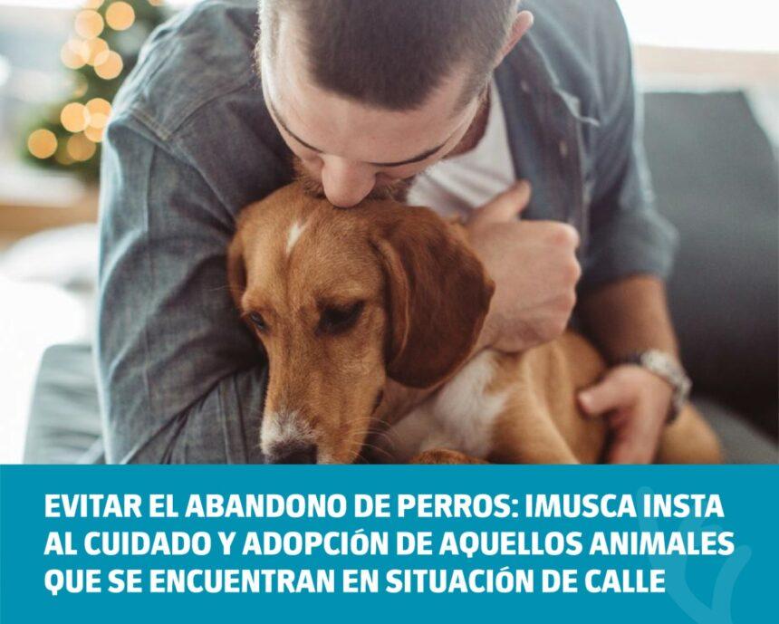Evitar el abandono de perros: Imusca insta al cuidado y adopción de animales que se encuentran en situación de calle