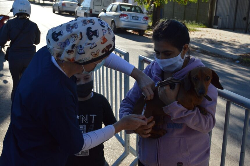 Jornada de vacunación en plaza Italia en vísperas del Día de Lucha Contra la Rabia