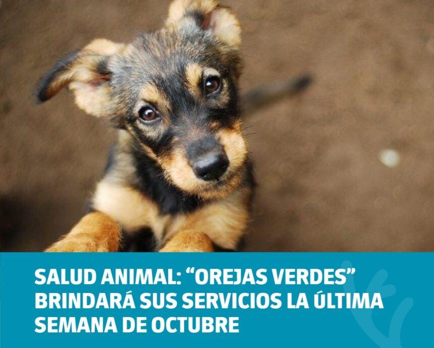 """Salud animal: """"Orejas Verdes"""" brindará sus servicios la última semana de octubre"""